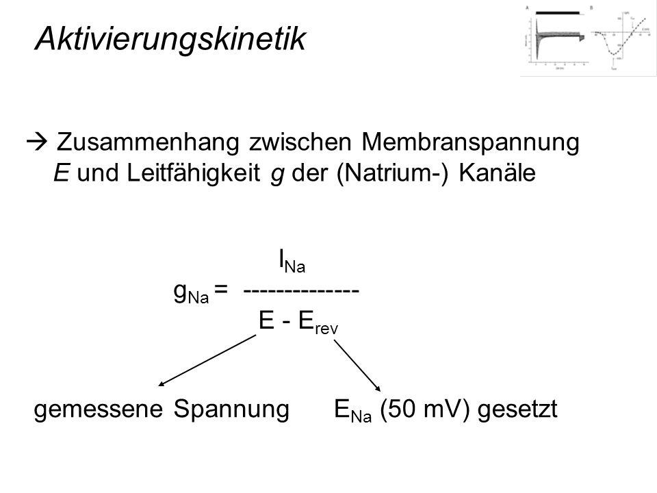 Aktivierungskinetik Zusammenhang zwischen Membranspannung E und Leitfähigkeit g der (Natrium-) Kanäle I Na g Na = -------------- E - E rev gemessene S