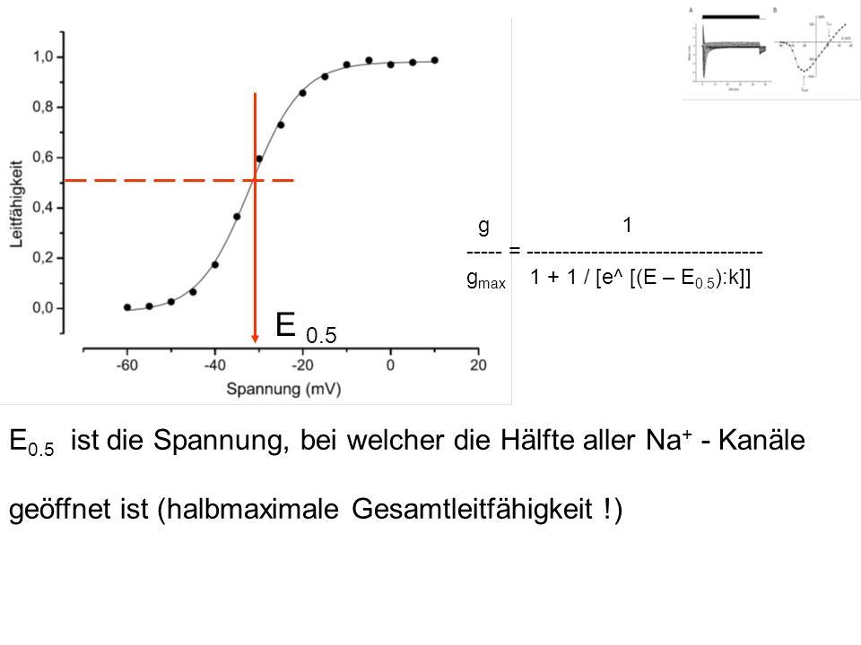 E 0.5 E 0.5 ist die Spannung, bei welcher die Hälfte aller Na + - Kanäle geöffnet ist (halbmaximale Gesamtleitfähigkeit !) g 1 ----- = ---------------