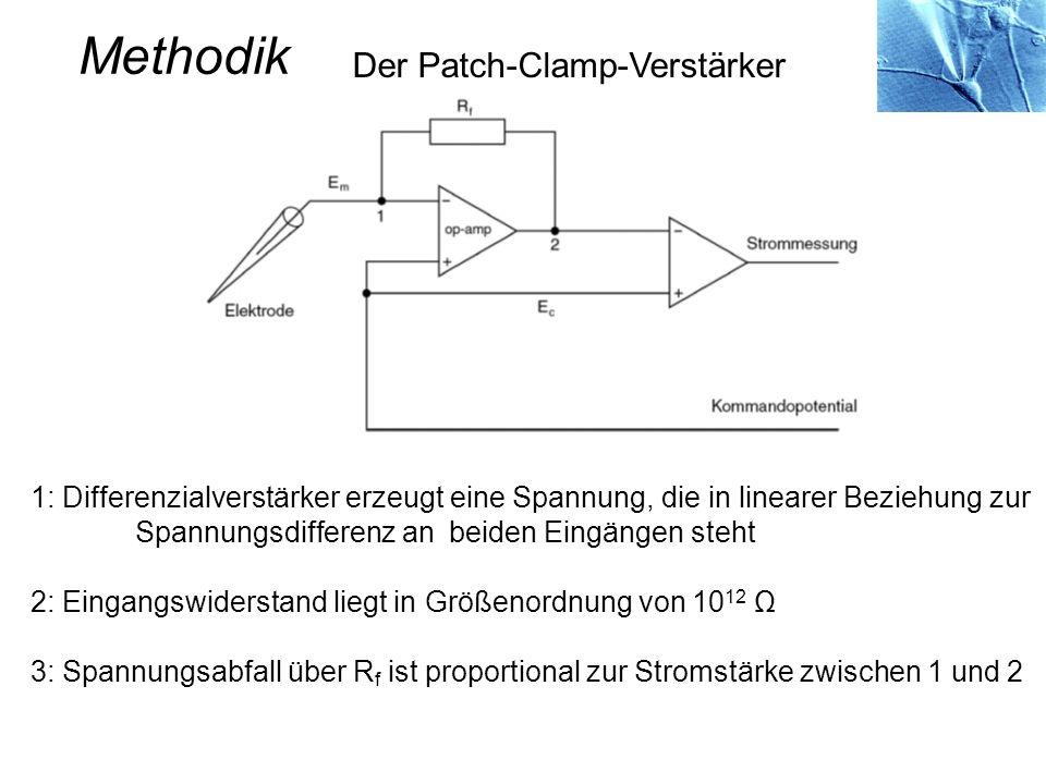 Der Patch-Clamp-Verstärker Methodik 1: Differenzialverstärker erzeugt eine Spannung, die in linearer Beziehung zur Spannungsdifferenz an beiden Eingän