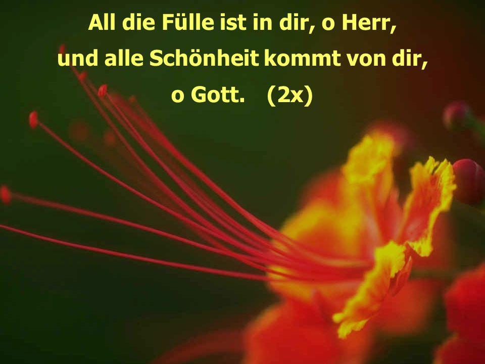 All die Fülle ist in dir, o Herr, und alle Schönheit kommt von dir, o Gott.(2x)