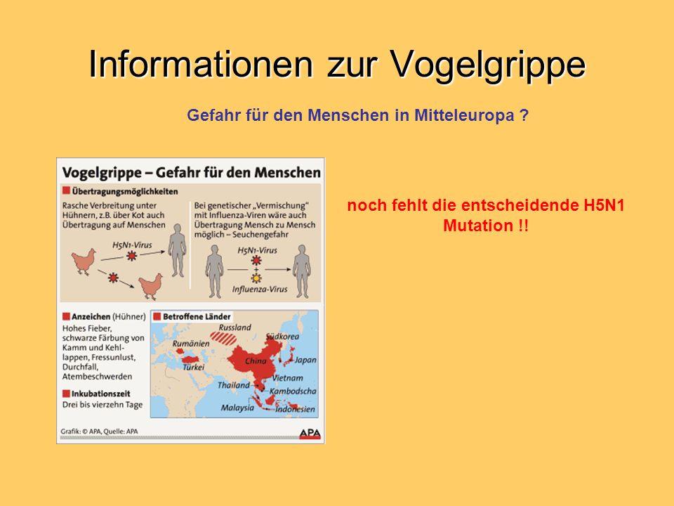Informationen zur Vogelgrippe Gefahr für den Menschen in Mitteleuropa ? noch fehlt die entscheidende H5N1 Mutation !!