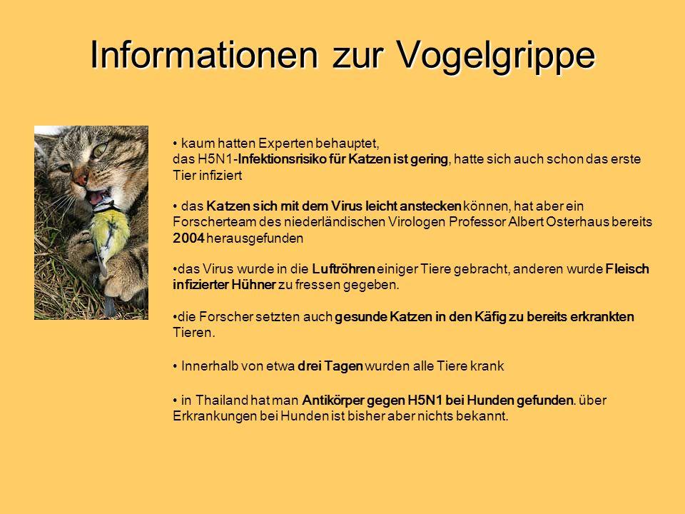 Informationen zur Vogelgrippe kaum hatten Experten behauptet, das H5N1-Infektionsrisiko für Katzen ist gering, hatte sich auch schon das erste Tier infiziert das Katzen sich mit dem Virus leicht anstecken können, hat aber ein Forscherteam des niederländischen Virologen Professor Albert Osterhaus bereits 2004 herausgefunden das Virus wurde in die Luftröhren einiger Tiere gebracht, anderen wurde Fleisch infizierter Hühner zu fressen gegeben.