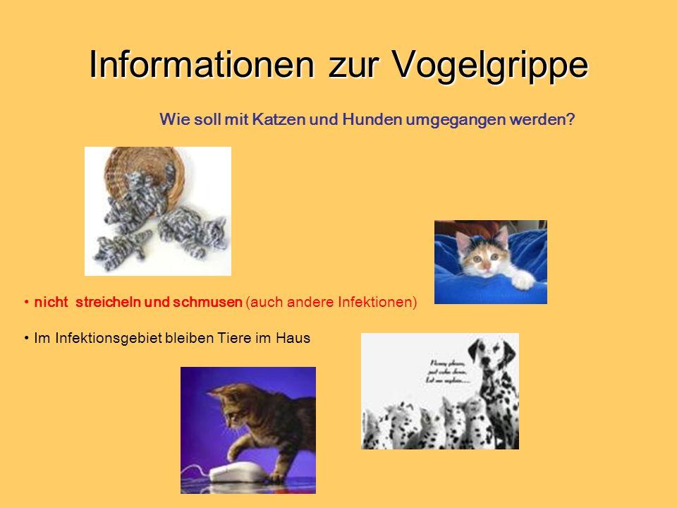 Informationen zur Vogelgrippe nicht streicheln und schmusen (auch andere Infektionen) Im Infektionsgebiet bleiben Tiere im Haus Wie soll mit Katzen und Hunden umgegangen werden?