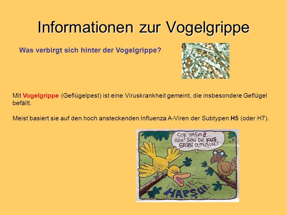 Informationen zur Vogelgrippe Mit Vogelgrippe (Geflügelpest) ist eine Viruskrankheit gemeint, die insbesondere Geflügel befällt. Meist basiert sie auf