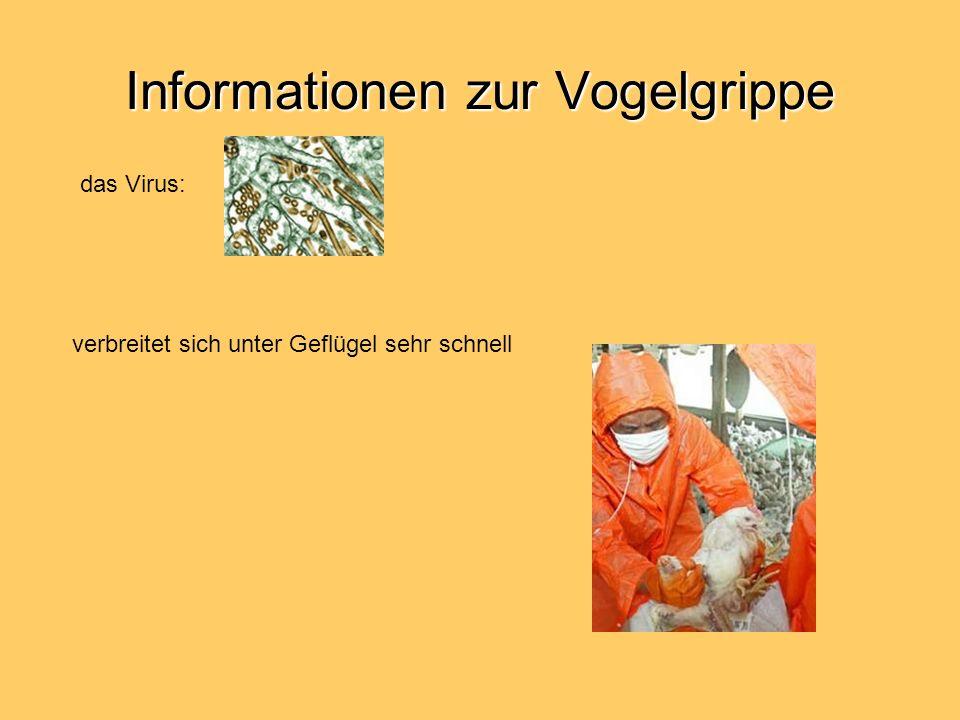 Informationen zur Vogelgrippe Nach einer Auflistung des Robert-Koch-Instituts gab es in der Vergangenheit folgende menschliche Erkrankungen durch Vogel-Influenzaviren: 1997 in Hongkong durch einen A/H5N1-Virus = 18 Erkrankte und 6 Tote; begleitend Geflügelpest im November/Dezember 1997.