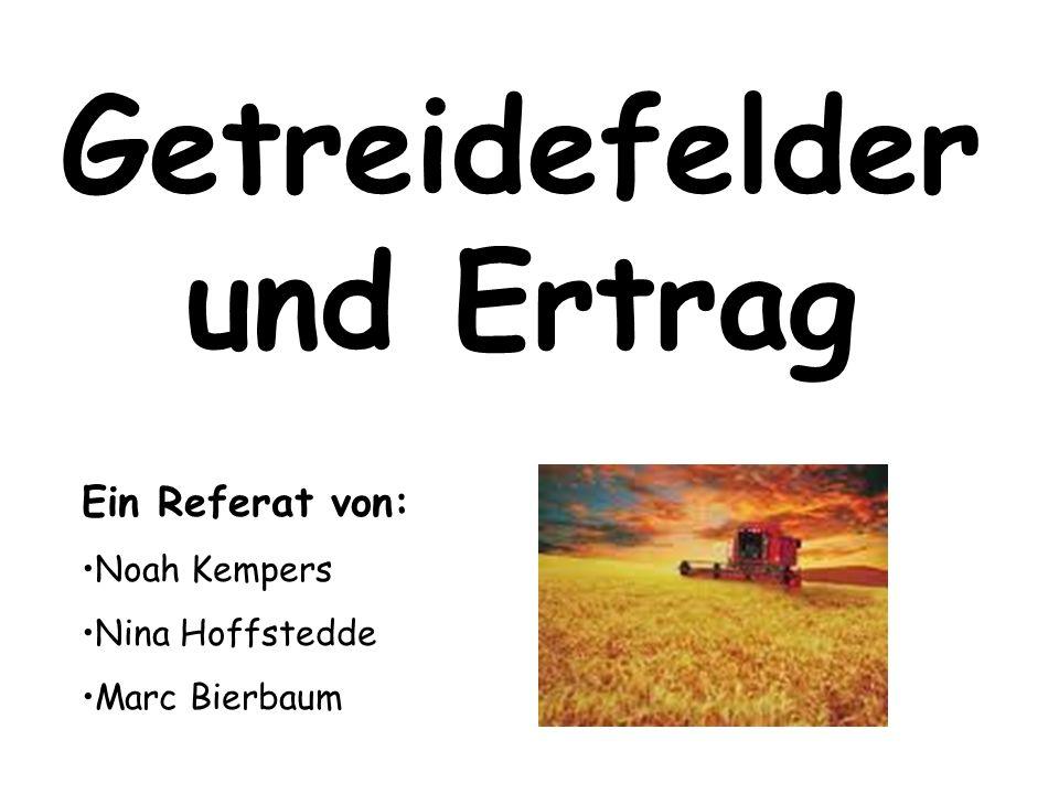 Getreidefelder und Ertrag Ein Referat von: Noah Kempers Nina Hoffstedde Marc Bierbaum