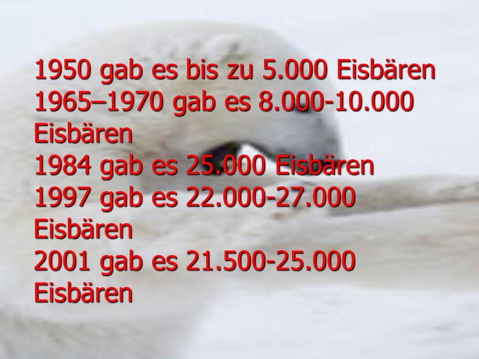 1950 gab es bis zu 5.000 Eisbären 1965–1970 gab es 8.000-10.000 Eisbären 1984 gab es 25.000 Eisbären 1997 gab es 22.000-27.000 Eisbären 2001 gab es 21.500-25.000 Eisbären