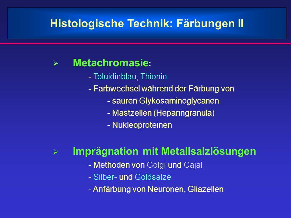 Histologische Technik: Färbungen II Metachromasie : - Toluidinblau, Thionin - Farbwechsel während der Färbung von - sauren Glykosaminoglycanen - Mastz