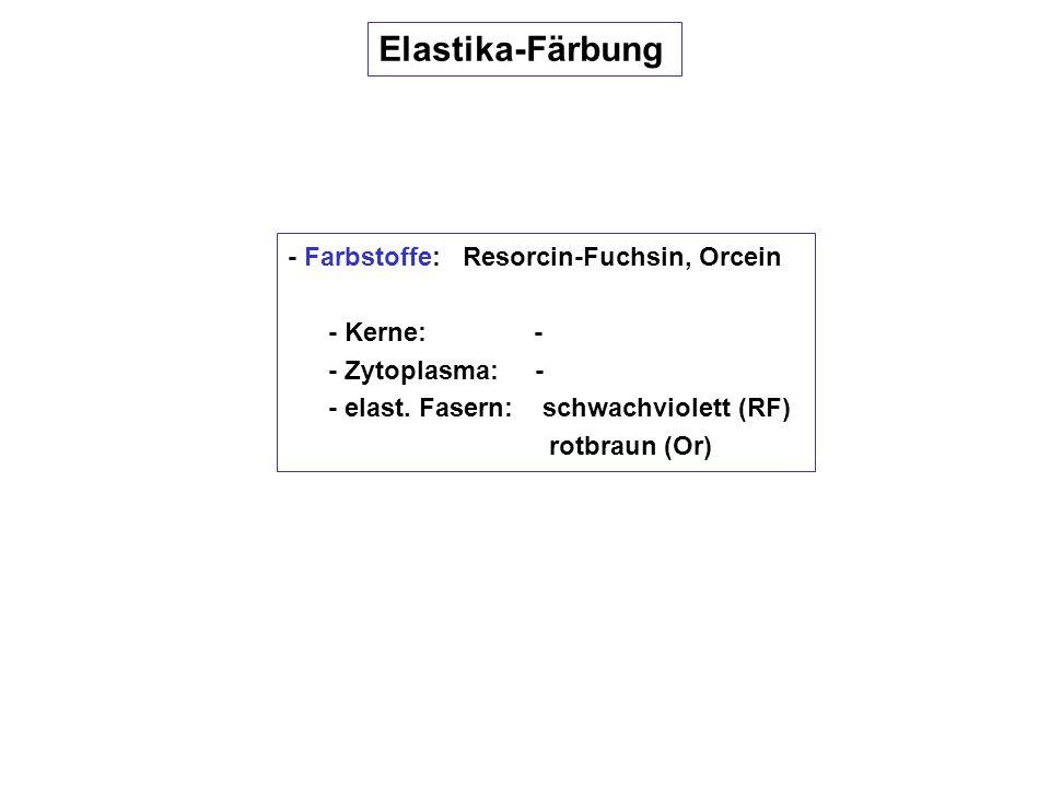 Elastika-Färbung - Farbstoffe: Resorcin-Fuchsin, Orcein - Kerne: - - Zytoplasma: - - elast. Fasern: schwachviolett (RF) rotbraun (Or)