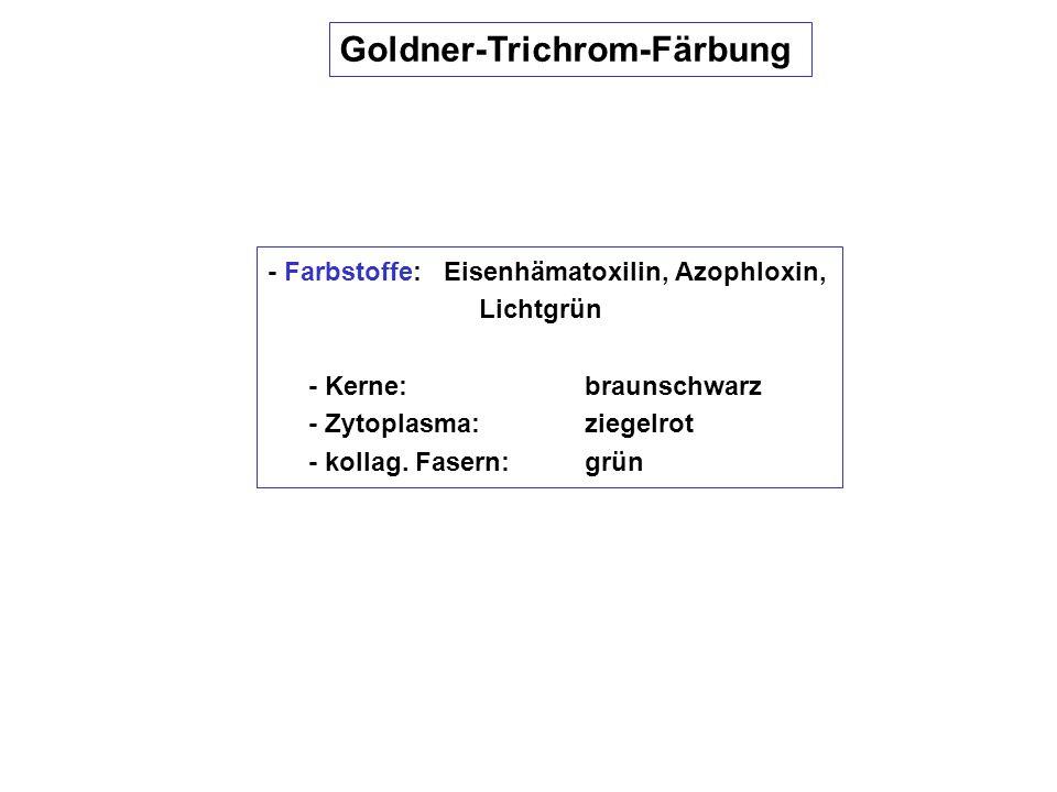Goldner-Trichrom-Färbung - Farbstoffe: Eisenhämatoxilin, Azophloxin, Lichtgrün - Kerne: braunschwarz - Zytoplasma:ziegelrot - kollag. Fasern:grün