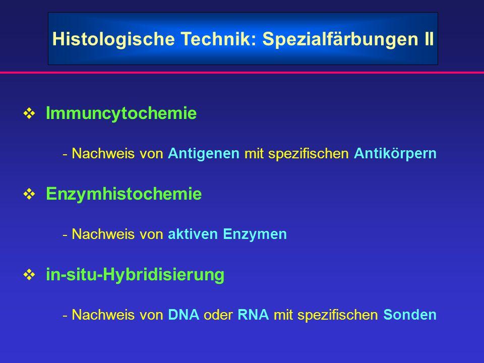 Histologische Technik: Spezialfärbungen II Immuncytochemie - Nachweis von Antigenen mit spezifischen Antikörpern Enzymhistochemie - Nachweis von aktiv