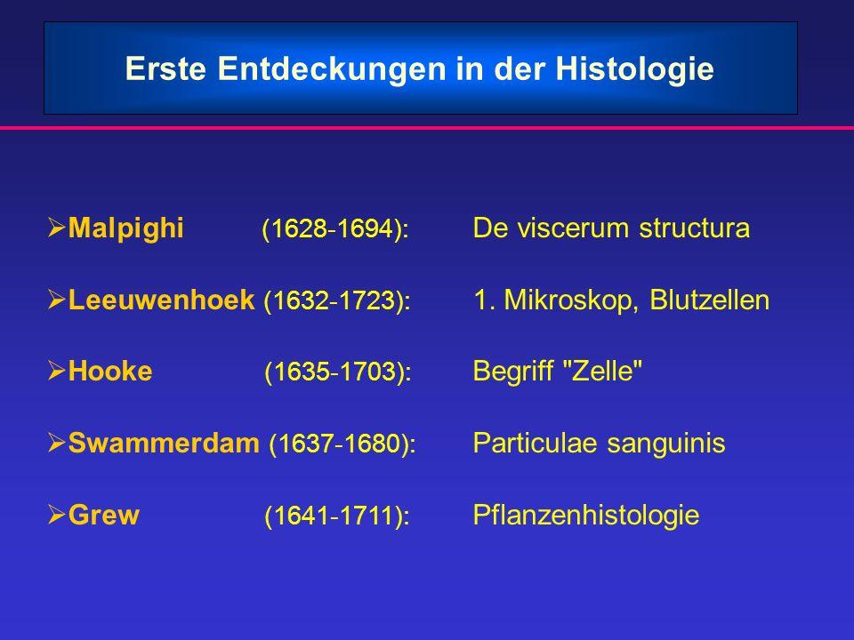 Erste Entdeckungen in der Histologie Malpighi (1628-1694): De viscerum structura Leeuwenhoek (1632-1723): 1. Mikroskop, Blutzellen Hooke (1635-1703):