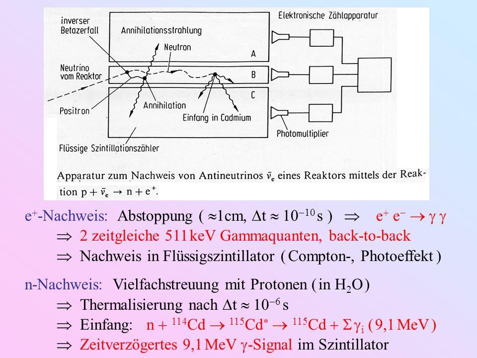 e -Nachweis: Abstoppung ( 1cm, t 10 10 s ) e e 2 zeitgleiche 511 keV Gammaquanten, back-to-back Nachweis in Flüssigszintillator ( Compton-, Photoeffek
