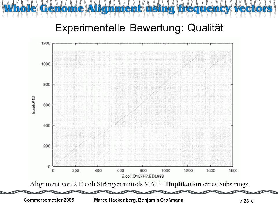 Sommersemester 2005Marco Hackenberg, Benjamin Großmann 23 Experimentelle Bewertung: Qualität Alignment von 2 E.coli Strängen mittels MAP – Duplikation