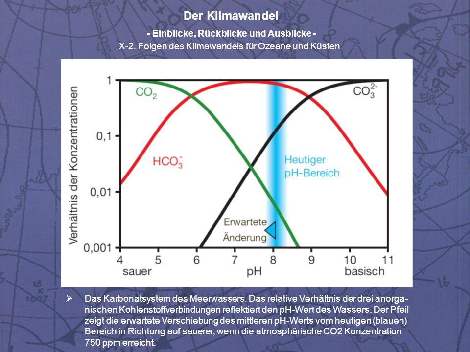 Der Klimawandel - Einblicke, Rückblicke und Ausblicke - X-2. Folgen des Klimawandels für Ozeane und Küsten Das Karbonatsystem des Meerwassers. Das rel