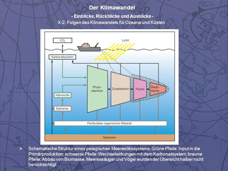 Der Klimawandel - Einblicke, Rückblicke und Ausblicke - X-2. Folgen des Klimawandels für Ozeane und Küsten Schematische Struktur eines pelagischen Mee