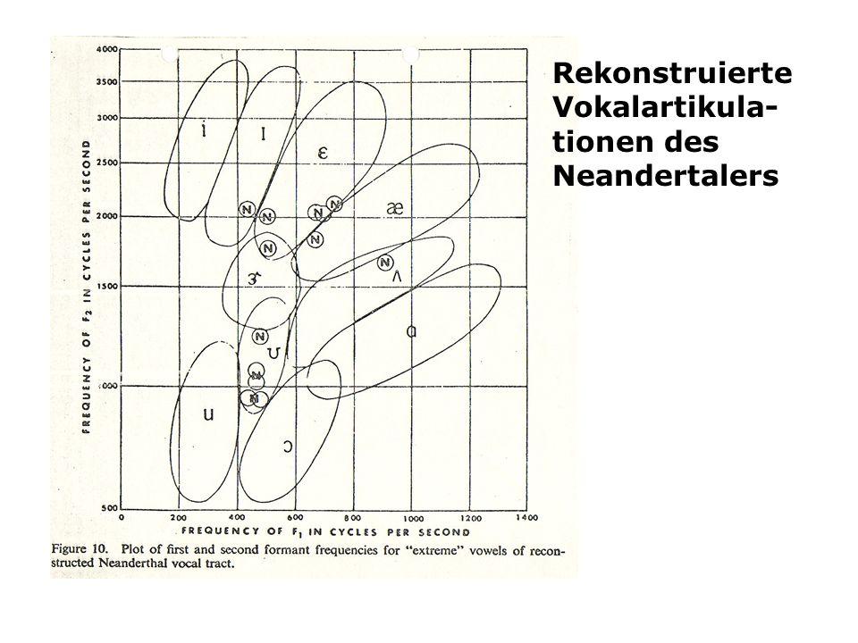 Rekonstruierte Vokalartikula- tionen des Neandertalers