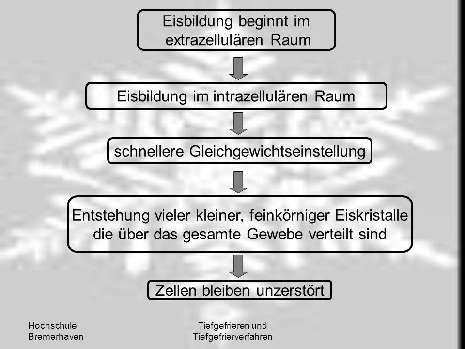 Hochschule Bremerhaven Tiefgefrieren und Tiefgefrierverfahren Eisbildung beginnt im extrazellulären Raum Eisbildung im intrazellulären Raum schnellere