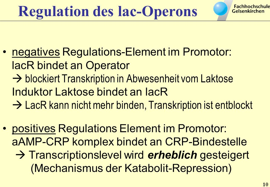 10 Regulation des lac-Operons negatives Regulations-Element im Promotor: lacR bindet an Operator blockiert Transkription in Abwesenheit vom Laktose In