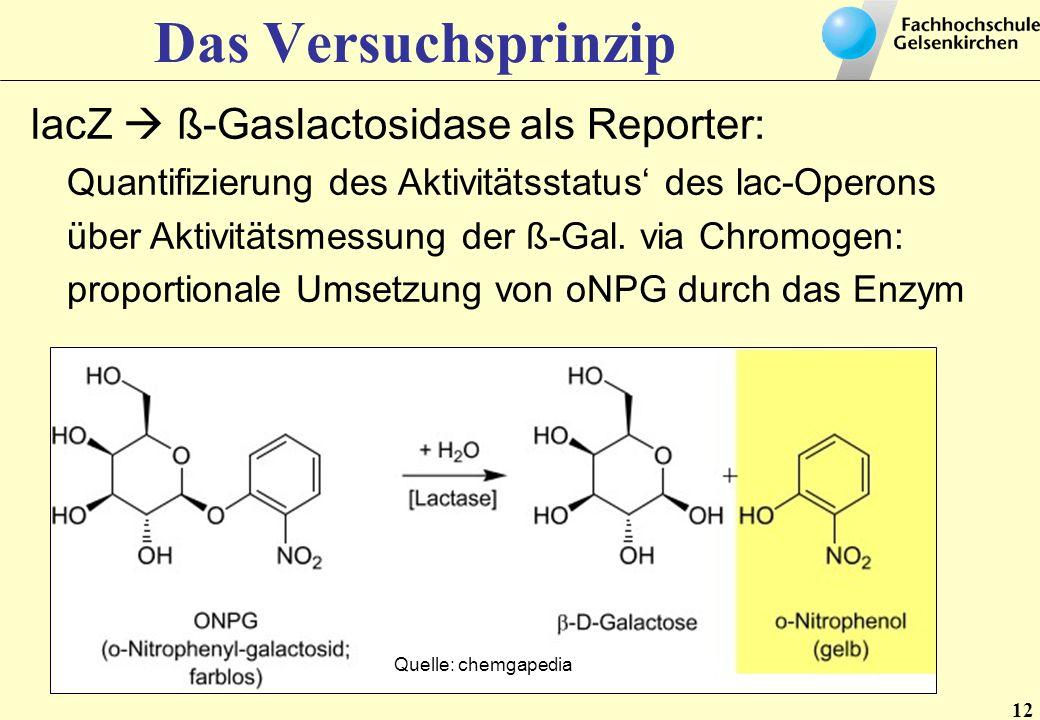 12 Das Versuchsprinzip lacZ ß-Gaslactosidase als Reporter: Quantifizierung des Aktivitätsstatus des lac-Operons über Aktivitätsmessung der ß-Gal. via