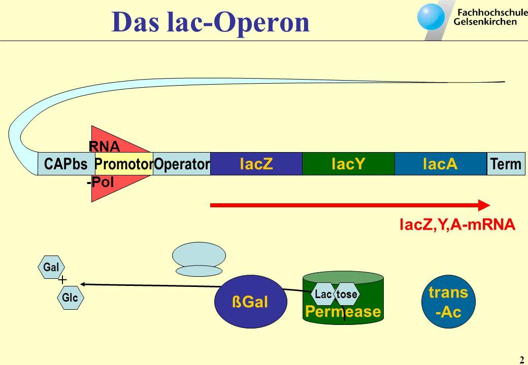 Lactose- Permease RNA -Pol lacZlacAlacY TermOperatorPromotorCAPbs trans -Ac ßGal Lactose Gal Glc + lacZ,Y,A- mRNA Lactose Zellmembran Lactose Cytoplasma E.coli - Chromosom Transkription Translation Medium