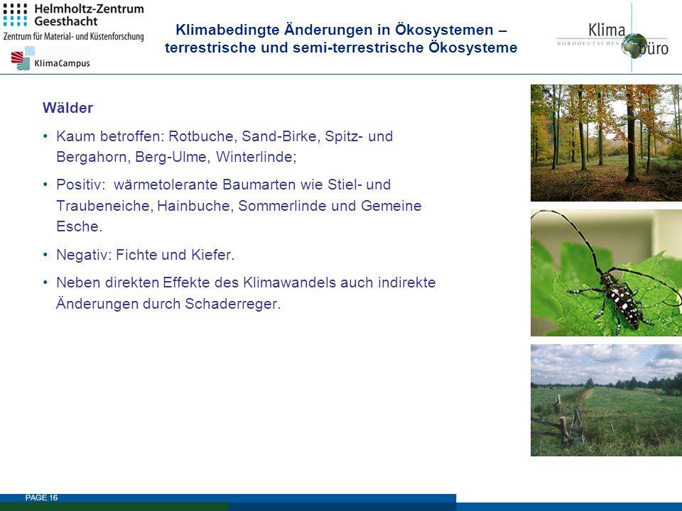 PAGE 16 Klimabedingte Änderungen in Ökosystemen – terrestrische und semi-terrestrische Ökosysteme Wälder Kaum betroffen: Rotbuche, Sand-Birke, Spitz-