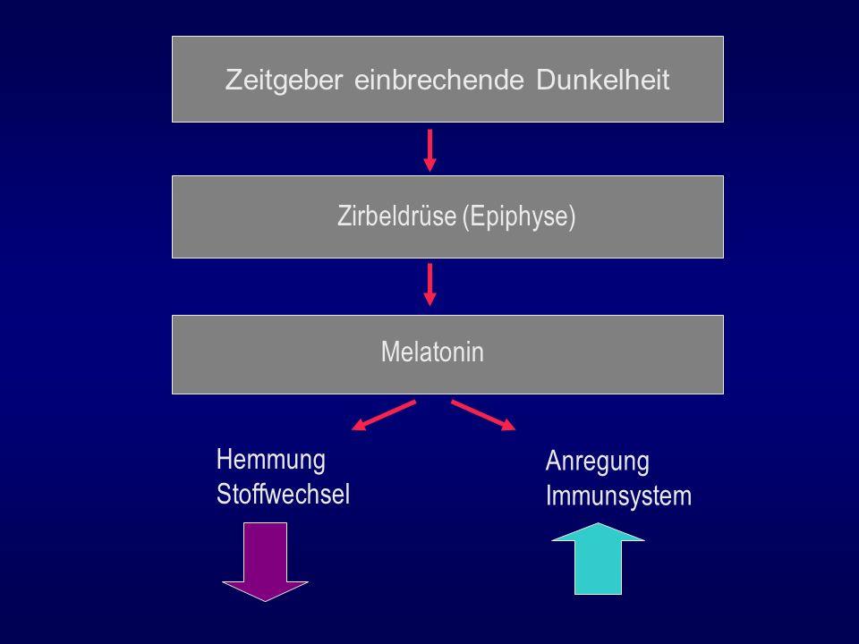 Zeitgeber einbrechende Dunkelheit Zirbeldrüse (Epiphyse) Melatonin Hemmung Stoffwechsel Anregung Immunsystem