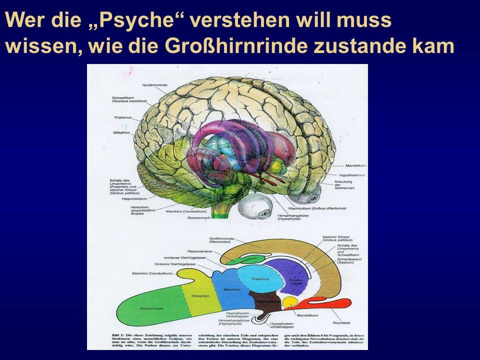 Wer die Psyche verstehen will muss wissen, wie die Großhirnrinde zustande kam