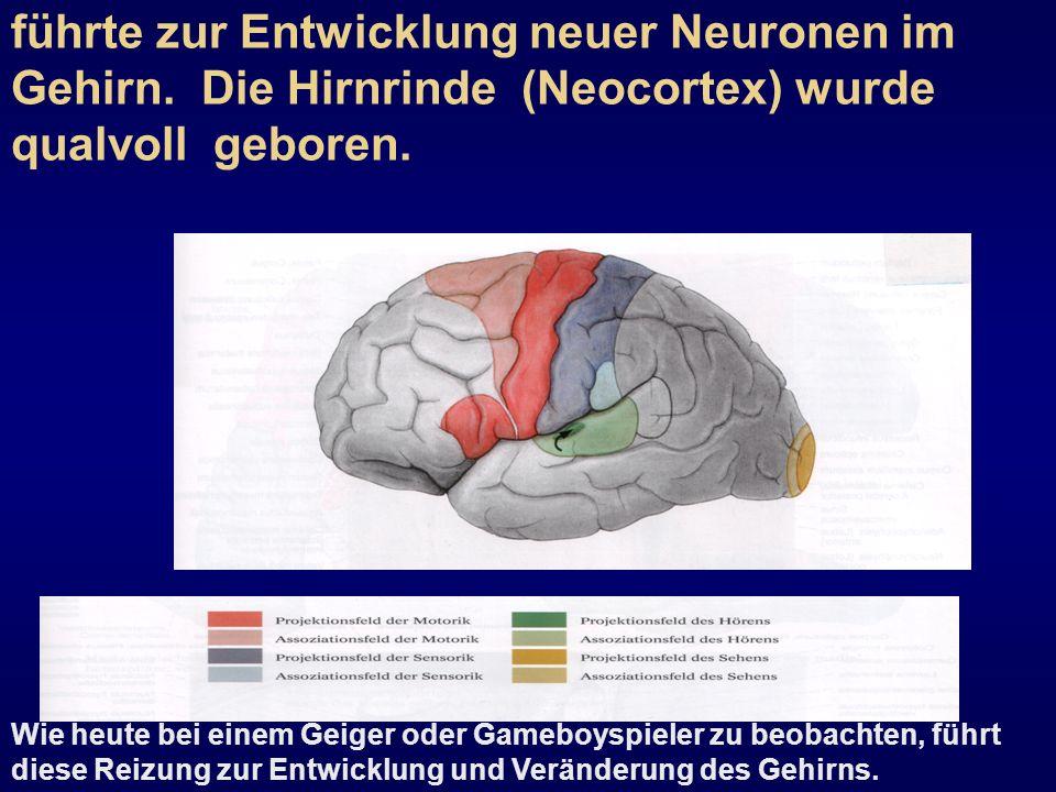Die Arbeit war ein Reiz für das Gehirn und führte zur Entwicklung neuer Neuronen im Gehirn. Die Hirnrinde (Neocortex) wurde qualvoll geboren. Wie heut