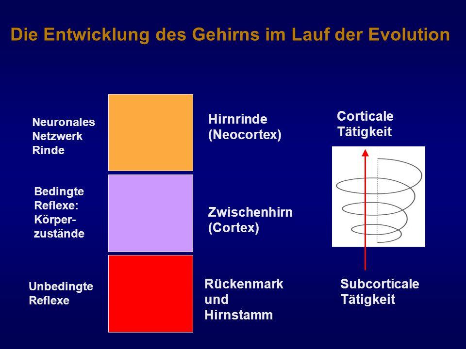 Die Entwicklung des Gehirns im Lauf der Evolution Rückenmark und Hirnstamm Hirnrinde (Neocortex) Zwischenhirn (Cortex) Subcorticale Tätigkeit Cortical