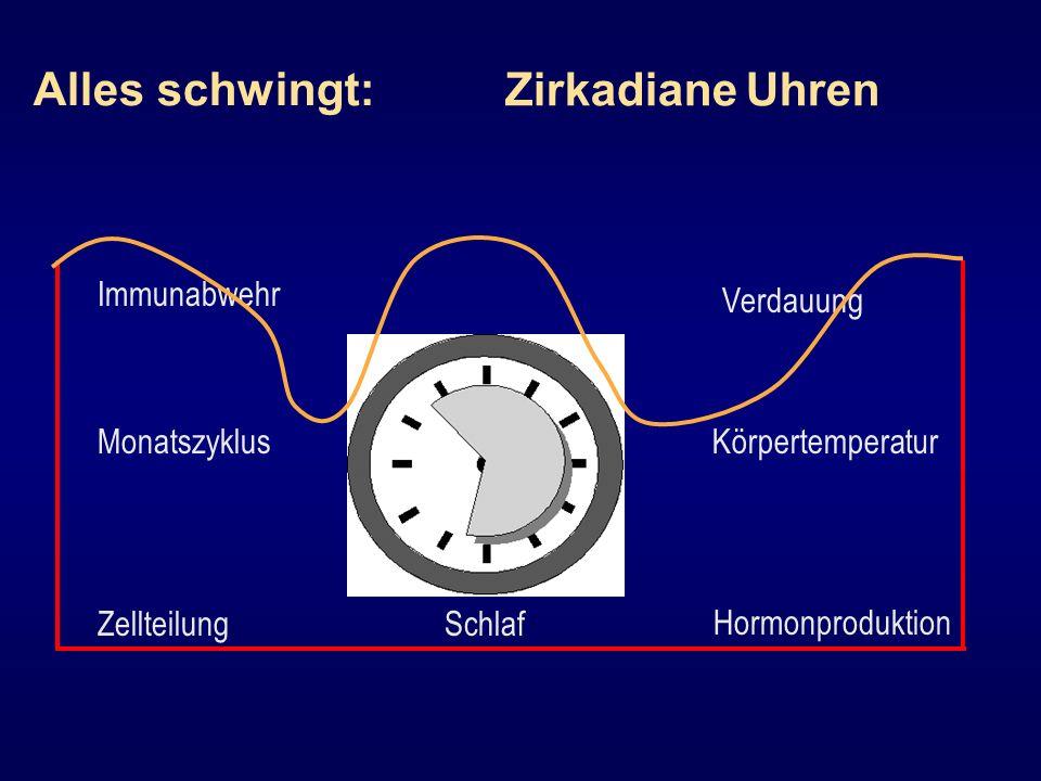 Alles schwingt: Zellteilung Verdauung Immunabwehr MonatszyklusKörpertemperatur Schlaf Hormonproduktion Zirkadiane Uhren