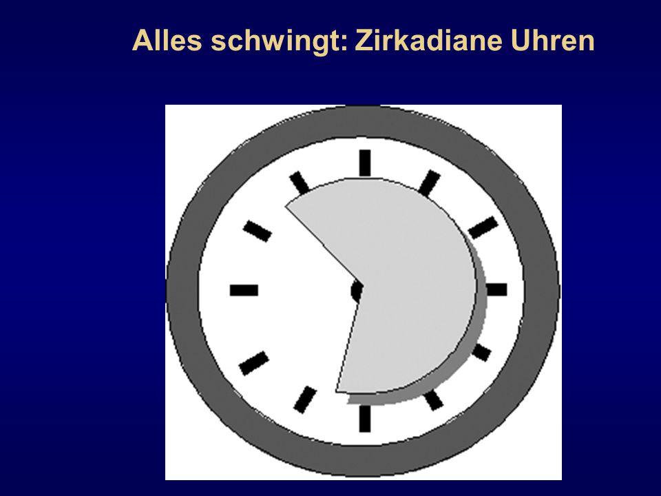 Alles schwingt: Zirkadiane Uhren