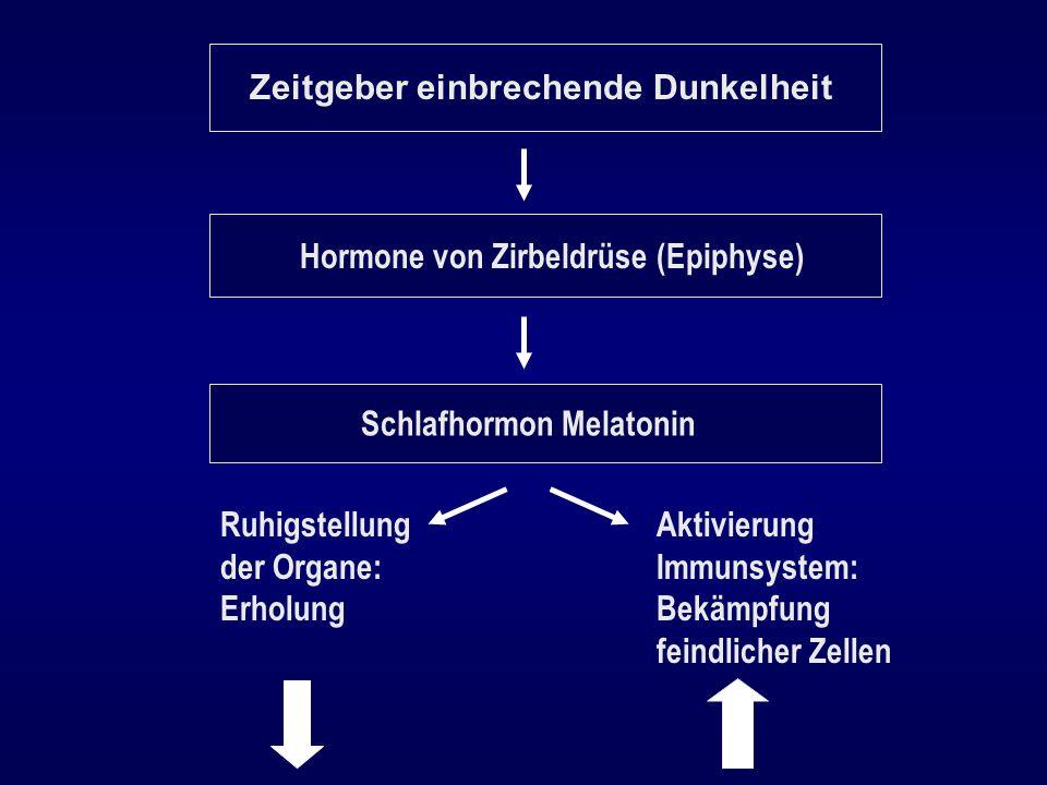 Zeitgeber einbrechende Dunkelheit Hormone von Zirbeldrüse (Epiphyse) Schlafhormon Melatonin Ruhigstellung der Organe: Erholung Aktivierung Immunsystem