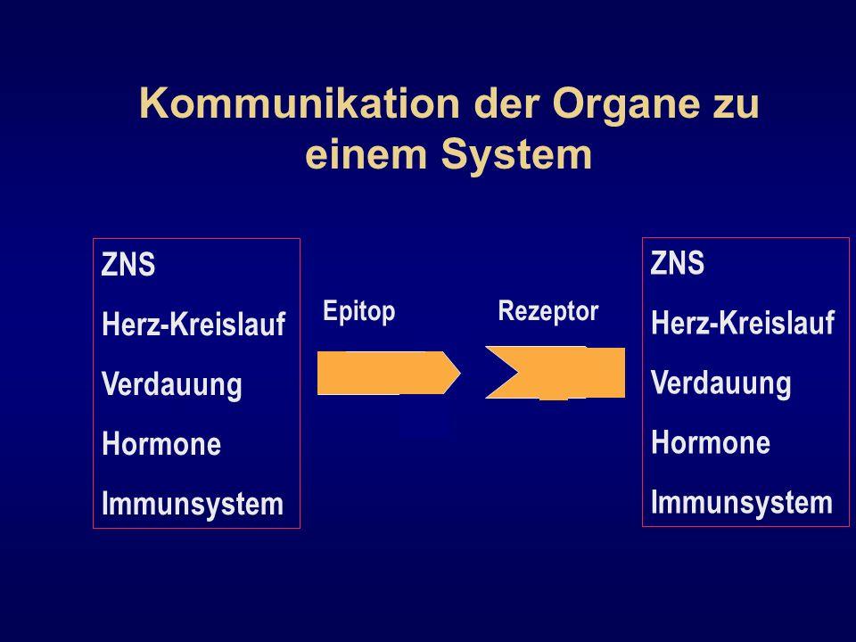 EpitopRezeptor ZNS Herz-Kreislauf Verdauung Hormone Immunsystem Kommunikation der Organe zu einem System ZNS Herz-Kreislauf Verdauung Hormone Immunsys