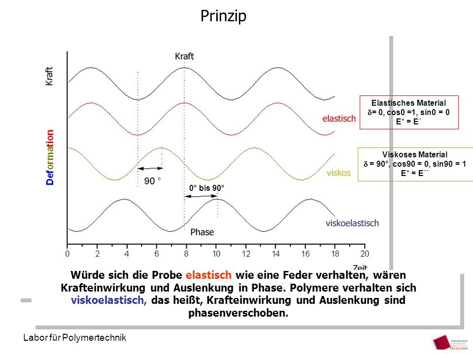 Labor für Polymertechnik Prinzip Würde sich die Probe elastisch wie eine Feder verhalten, wären Krafteinwirkung und Auslenkung in Phase. Polymere verh