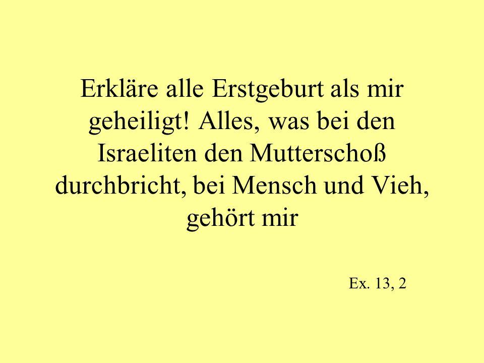 Erkläre alle Erstgeburt als mir geheiligt! Alles, was bei den Israeliten den Mutterschoß durchbricht, bei Mensch und Vieh, gehört mir Ex. 13, 2