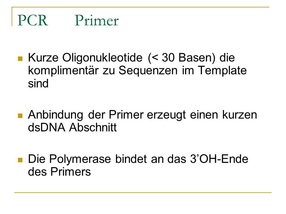 PCR Primer Kurze Oligonukleotide (< 30 Basen) die komplimentär zu Sequenzen im Template sind Anbindung der Primer erzeugt einen kurzen dsDNA Abschnitt