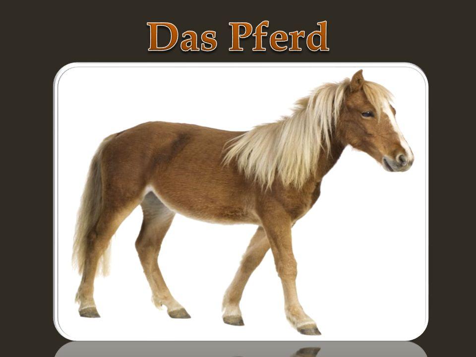 -Das Pferd ist ein pflanzenfressendes Säugetier der Gattung Equus.