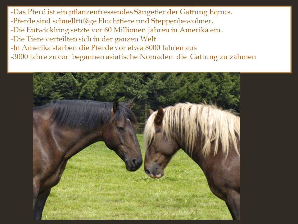 -Das Pferd ist ein pflanzenfressendes Säugetier der Gattung Equus. -Pferde sind schnellfüßige Fluchttiere und Steppenbewohner. -Die Entwicklung setzte