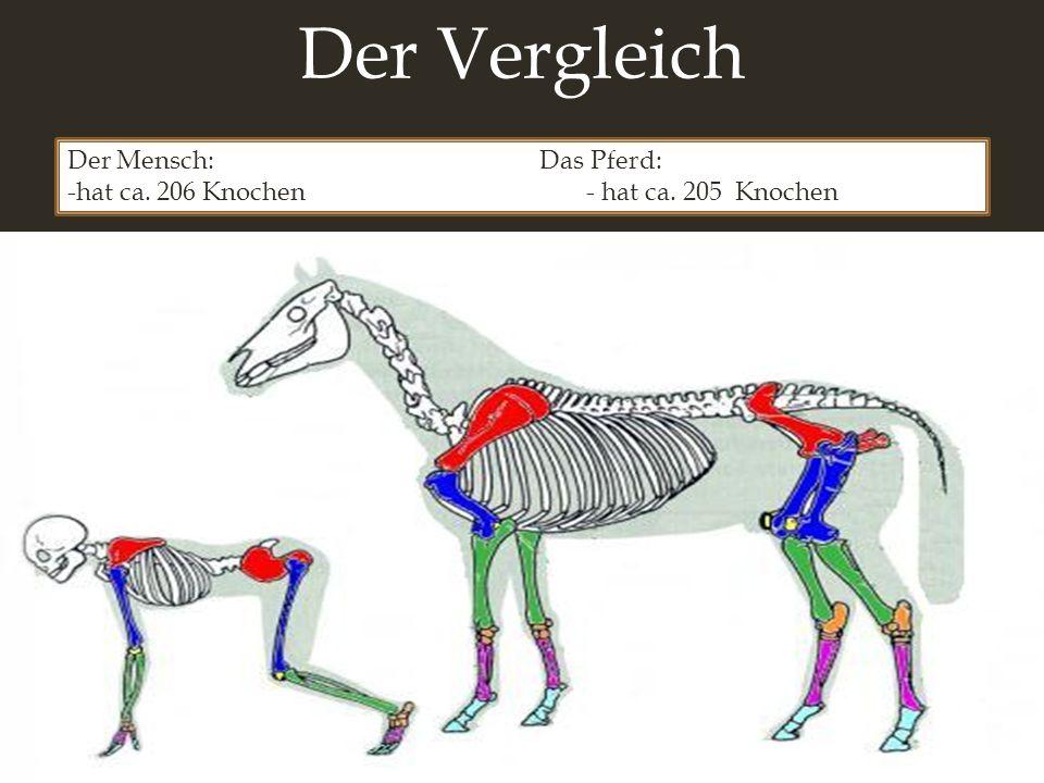 Groß Pferde Anatomie Der Wirbelsäule Bilder - Menschliche Anatomie ...