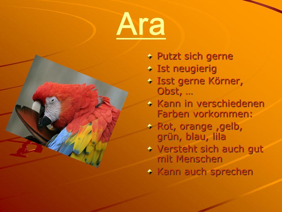 Ara Putzt sich gerne Ist neugierig Isst gerne Körner, Obst, … Kann in verschiedenen Farben vorkommen: Rot, orange,gelb, grün, blau, lila Versteht sich auch gut mit Menschen Kann auch sprechen