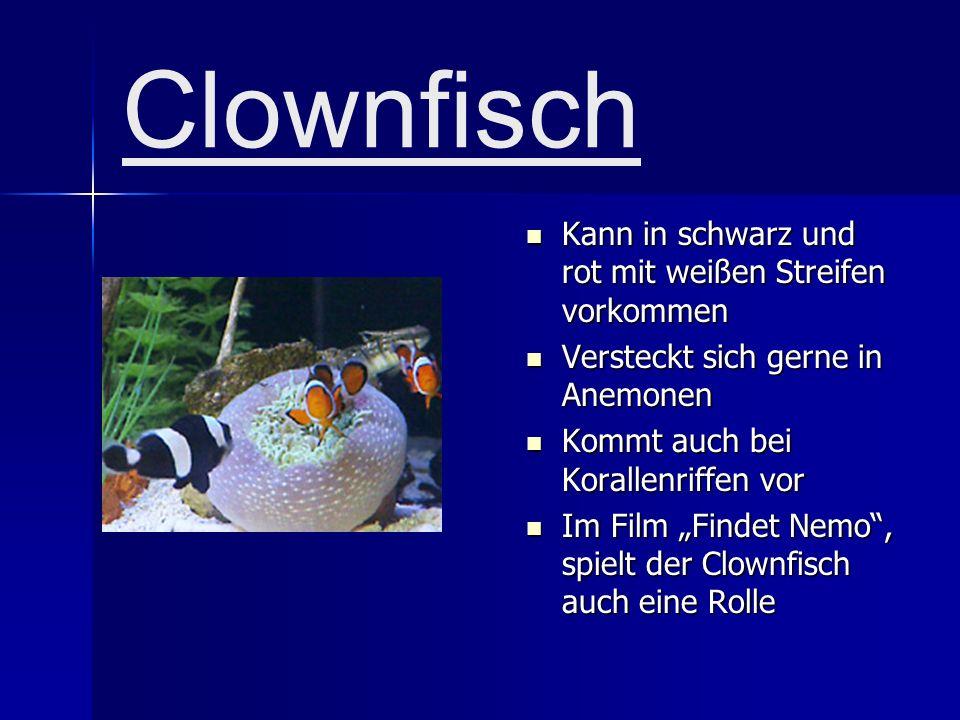 Clownfisch Kann in schwarz und rot mit weißen Streifen vorkommen Versteckt sich gerne in Anemonen Kommt auch bei Korallenriffen vor Im Film Findet Nemo, spielt der Clownfisch auch eine Rolle