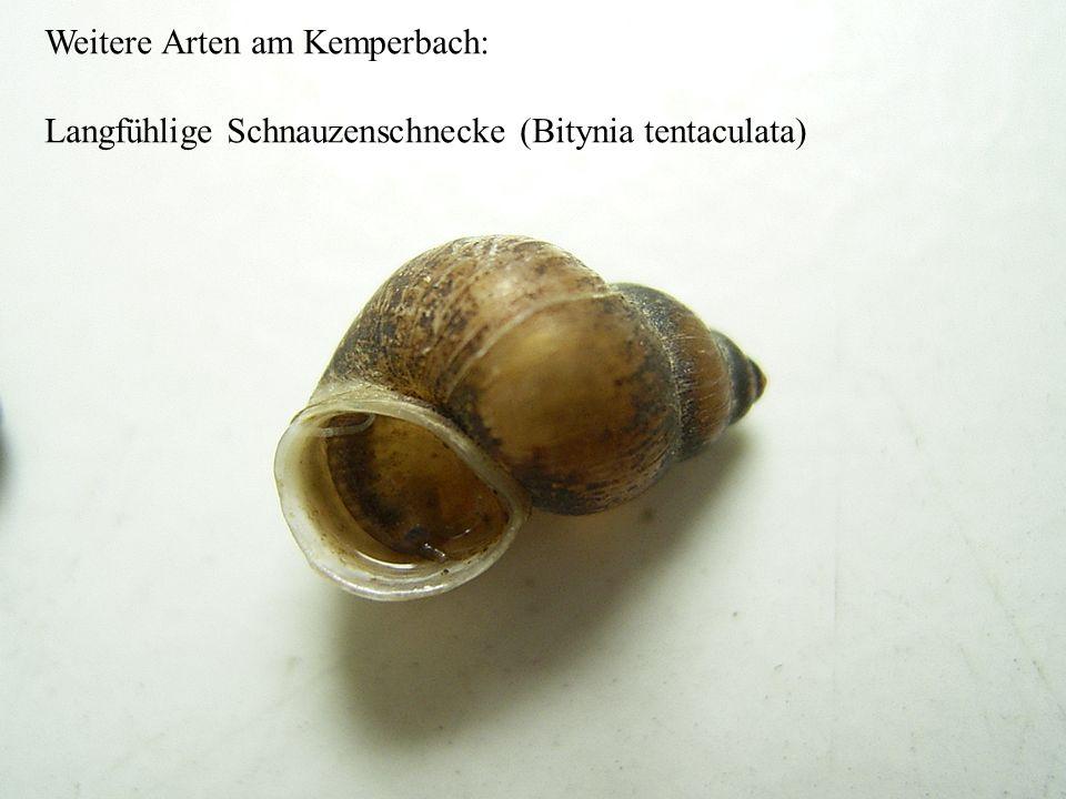 Die von uns gemessenen Werte im Rhein und im Kemper Bach (Thielenbruch) Die Nitratwerte sind recht gering in beiden Gewässern (dies wäre sogar für Tri