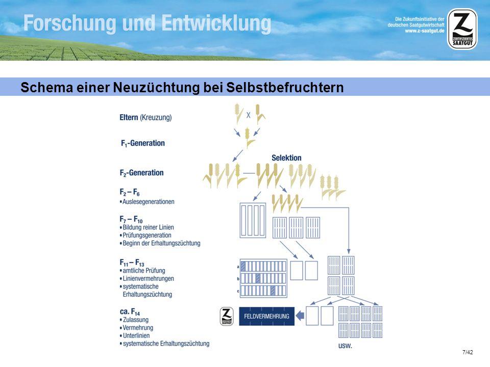 8/42 Schema der Erhaltungszüchtung bei Selbstbefruchtern Die Auslese der Einzelpflanzen garantiert Sortenechtheit.