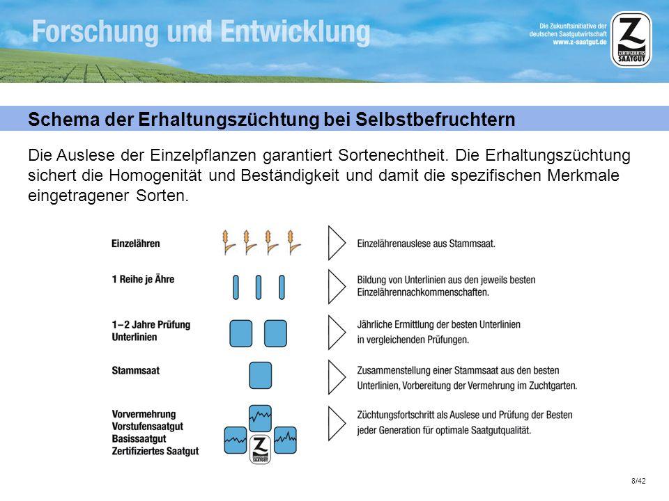 8/42 Schema der Erhaltungszüchtung bei Selbstbefruchtern Die Auslese der Einzelpflanzen garantiert Sortenechtheit. Die Erhaltungszüchtung sichert die
