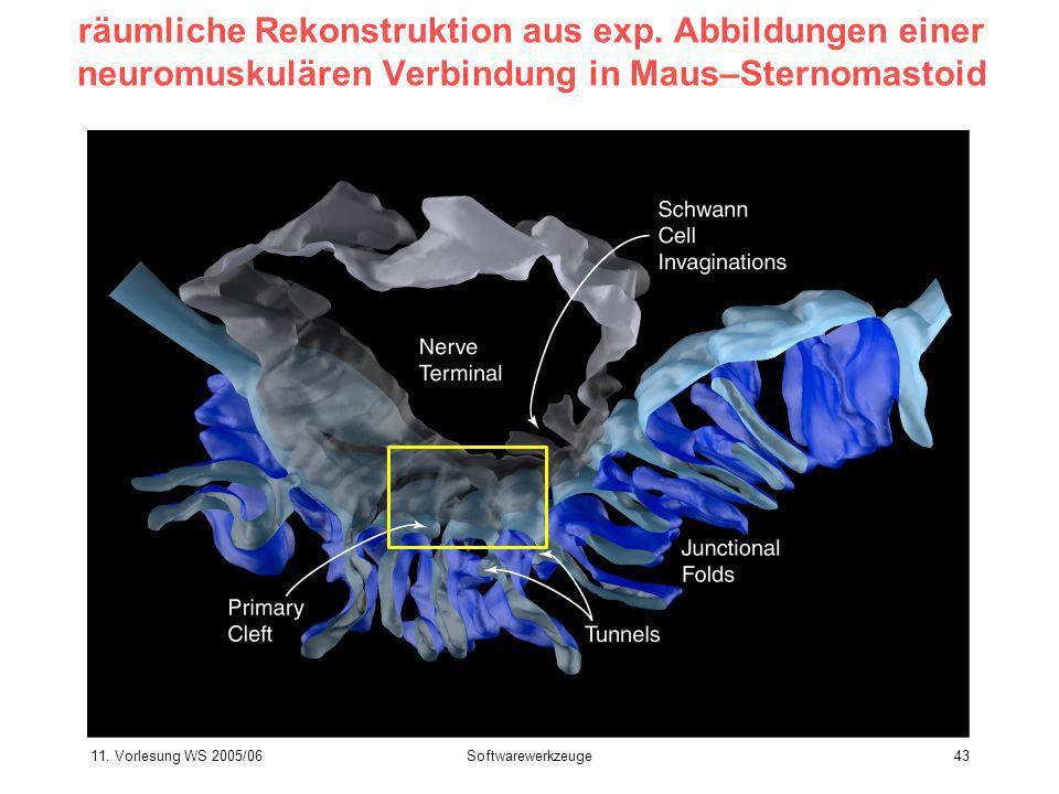 11. Vorlesung WS 2005/06Softwarewerkzeuge43 räumliche Rekonstruktion aus exp. Abbildungen einer neuromuskulären Verbindung in Maus–Sternomastoid