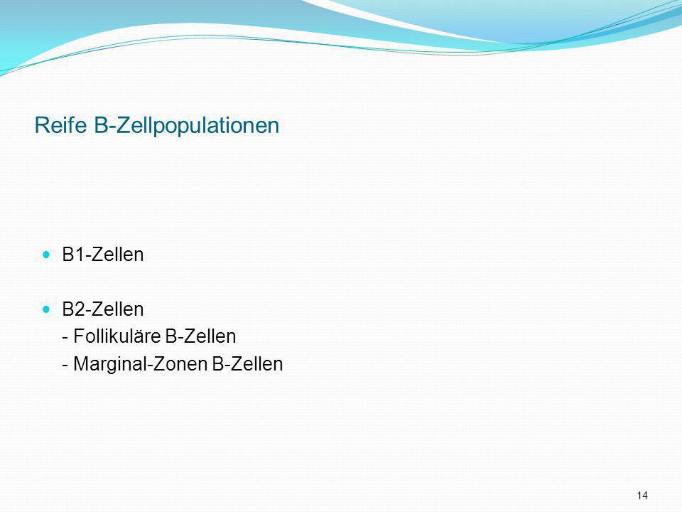 Reife B-Zellpopulationen B1-Zellen B2-Zellen - Follikuläre B-Zellen - Marginal-Zonen B-Zellen 14