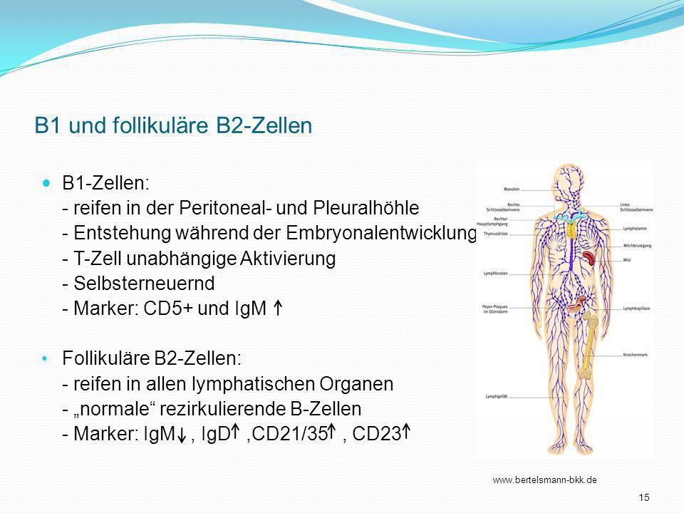 B1 und follikuläre B2-Zellen B1-Zellen: - reifen in der Peritoneal- und Pleuralhöhle - Entstehung während der Embryonalentwicklung - T-Zell unabhängig