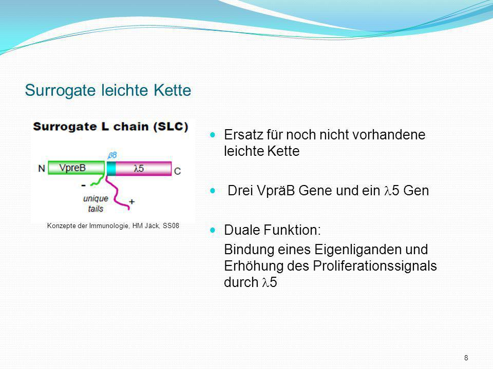 Surrogate leichte Kette Ersatz für noch nicht vorhandene leichte Kette Drei VpräB Gene und ein 5 Gen Duale Funktion: Bindung eines Eigenliganden und E