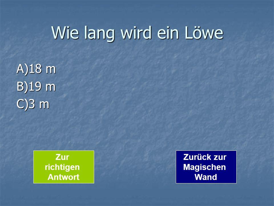 Wie lang wird ein Löwe A)18 m B)19 m C)3 m Zurück zur Magischen Wand Zur richtigen Antwort
